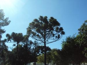 primavera- 11-09-13 022