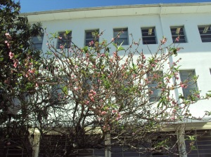 primavera- 11-09-13 023