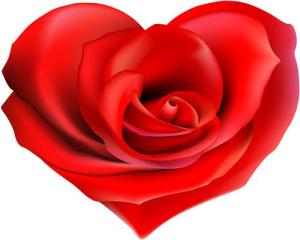 Rosa-coracao